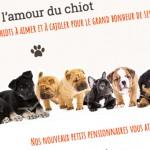 Dog Family animalerie